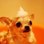 Donner le bain à son chien : mode d'emploi