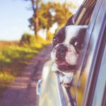 10 habitudes agaçantes qu'a votre chien et leurs solutions appropriées