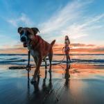 Comment éviter la prise de poids d'une chienne après la stérilisation ?