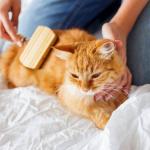 Comment soigner les animaux de compagnie à la maison ?