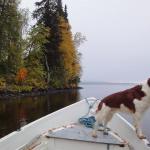 Pêcher avec son chien : tous nos conseils