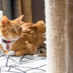 Pourquoi et comment acheter un collier GPS pour chat ?