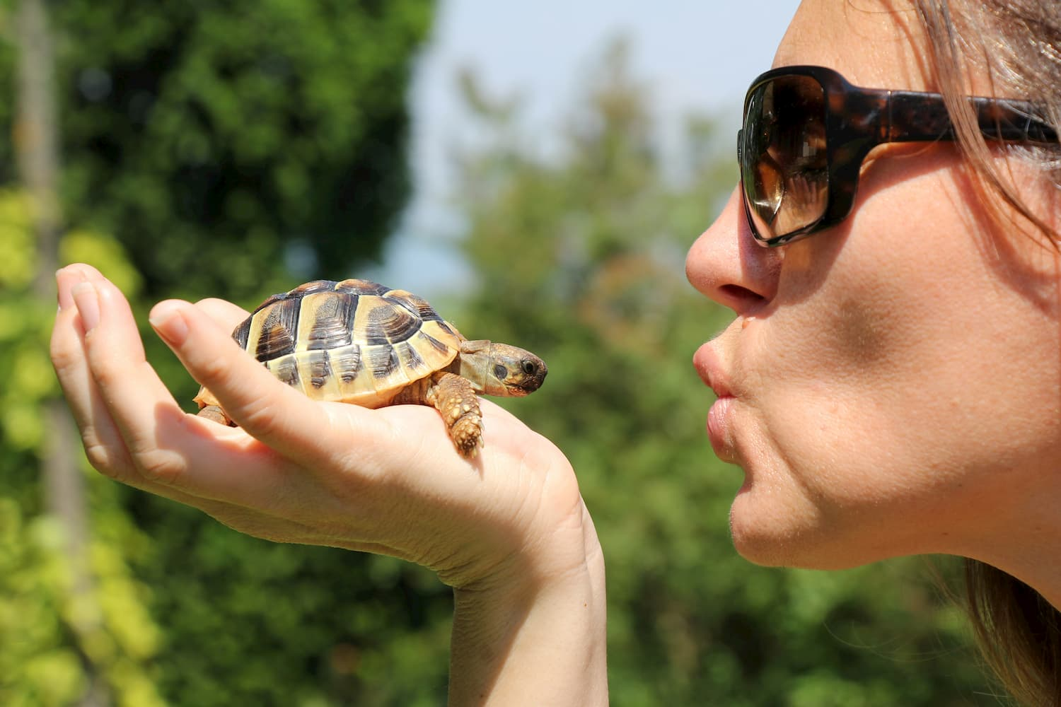 tortue animal compagnie