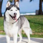 Les bienfaits de la spiruline pour son chien