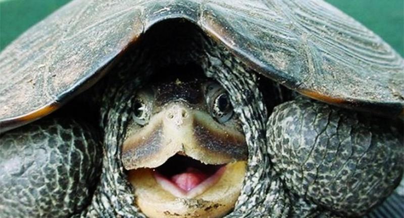 acheter une tortue comme animal de compagnie