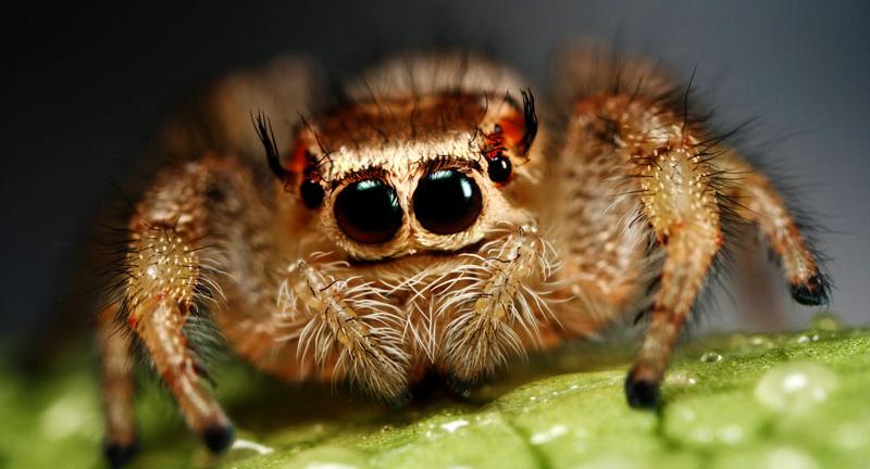 araignée de compagnie
