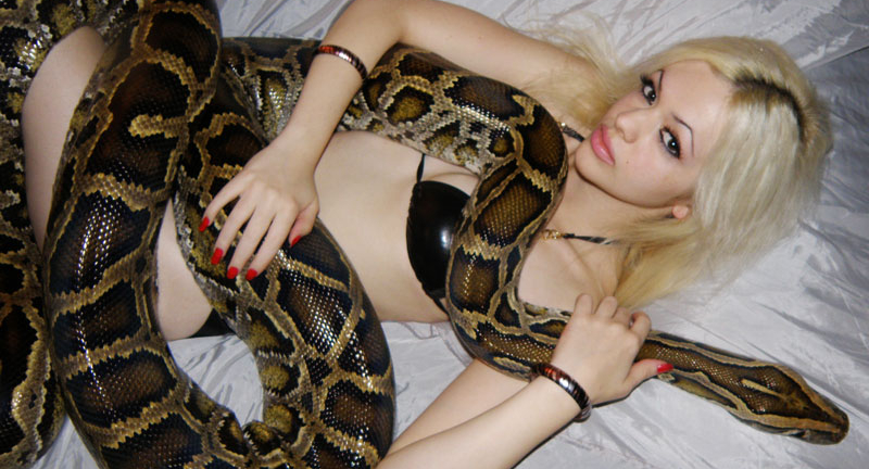 serpent animal compagnie