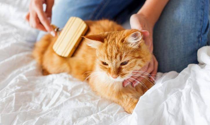 soigner animal compagnie