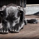 Qu'est ce qu'une température normale pour les chiens ?