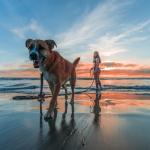 6 sports à pratiquer avec son chien