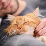 Tous les bienfaits de faire la sieste avec un chat !
