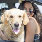 Ce qu'il faut savoir avant de voyager avec votre chien en voiture