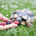 7 avantages d'avoir une tortue pour animal de compagnie