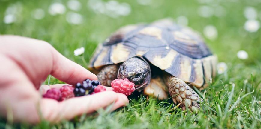 avoir une tortue comme animal de compagnie