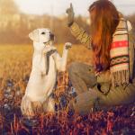 10 erreurs à ne pas commettre dans le dressage d'un chien