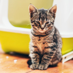 Litière chat auto nettoyante : comment la choisir ?