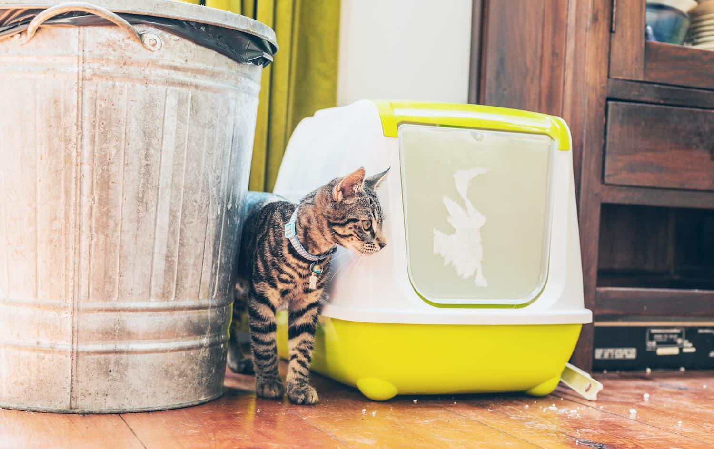 meilleure litière autonettoyante chat