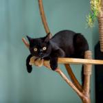 Arbre à chat : pourquoi il est indispensable ?