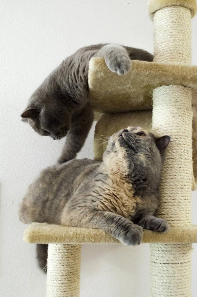 acheter un arbre a chat