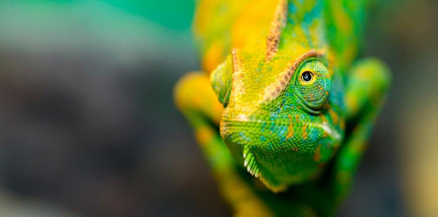 comment acheter un reptile