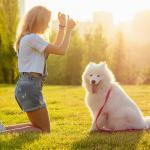 L'éducation animale : une étape importante de la vie d'un chien