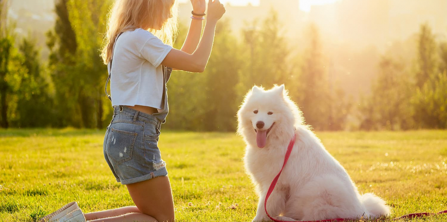 éducation animale chien