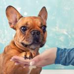 Guide pour bien dresser votre chien